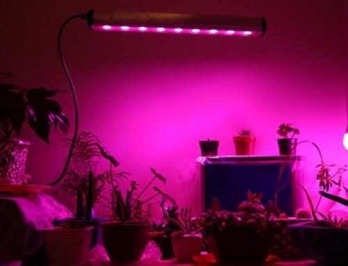 ال-ای-دی-رشد-گیاه-و-رشد-10-گیاه-آپارتمانی-500x383